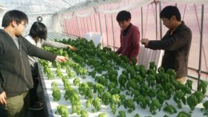 農業経営科体験写真