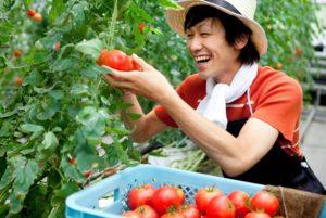 プランターでトマトを育てよう