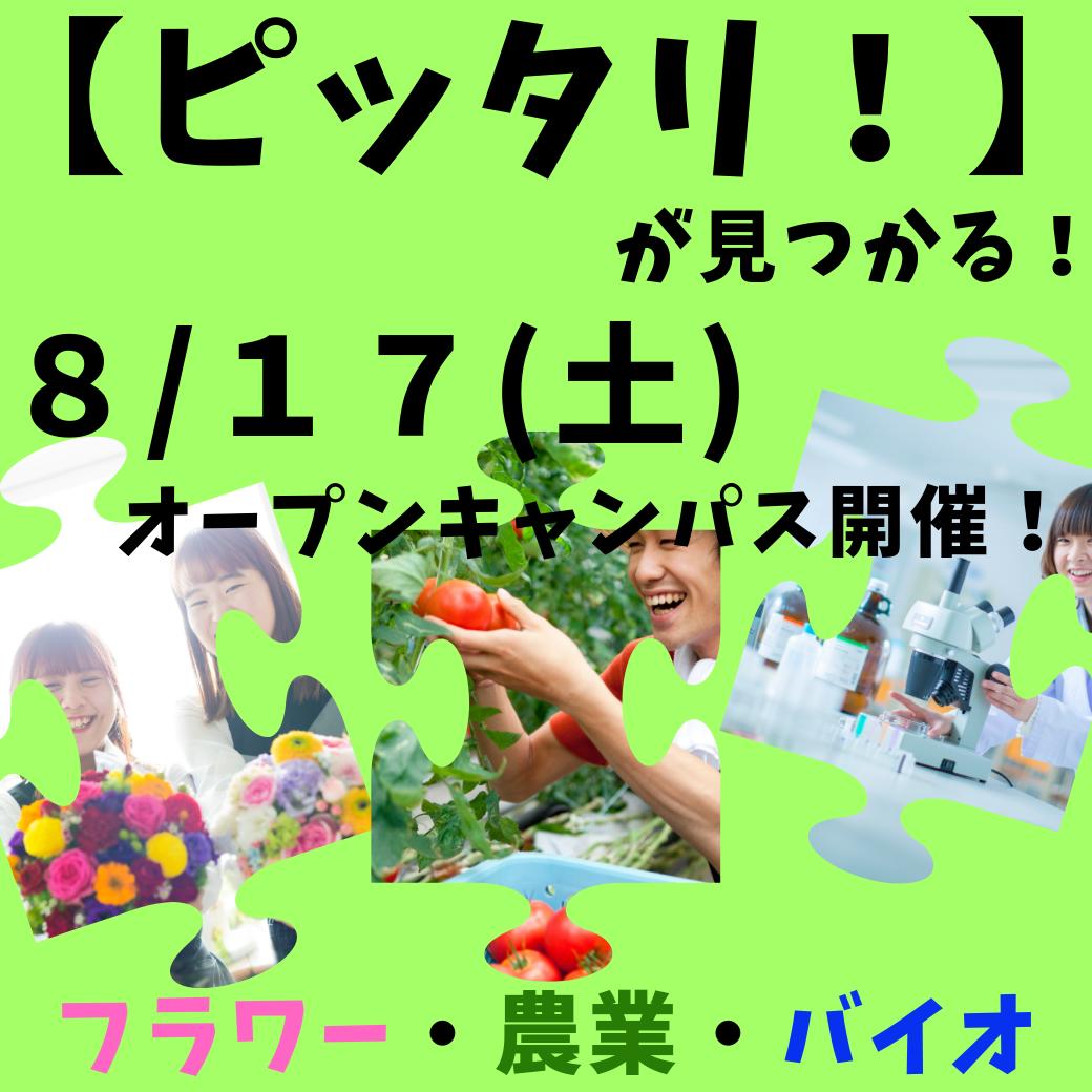 8_17(土)