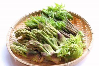 山菜の盛り合わせ(タラの芽、コシアブラ、フキノトウ)